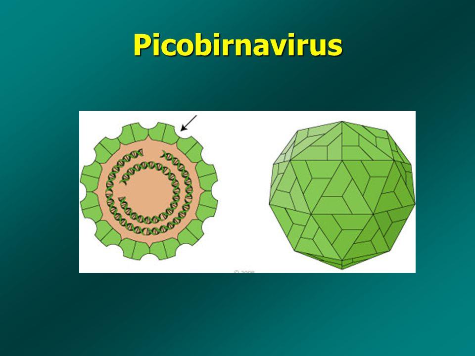 Picobirnavirus