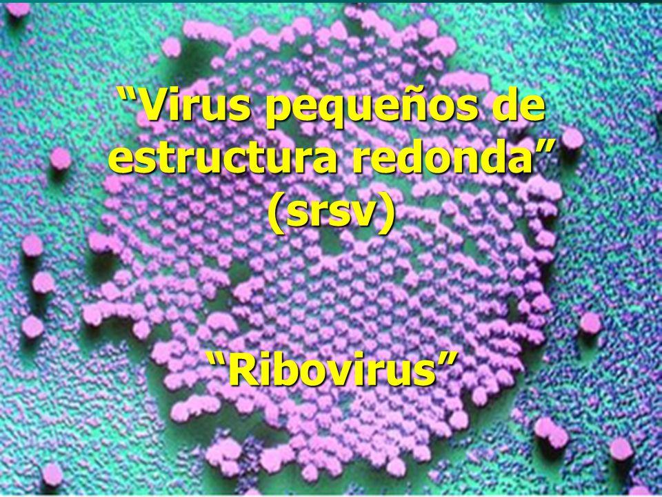 Virus pequeños de estructura redonda (srsv) Ribovirus
