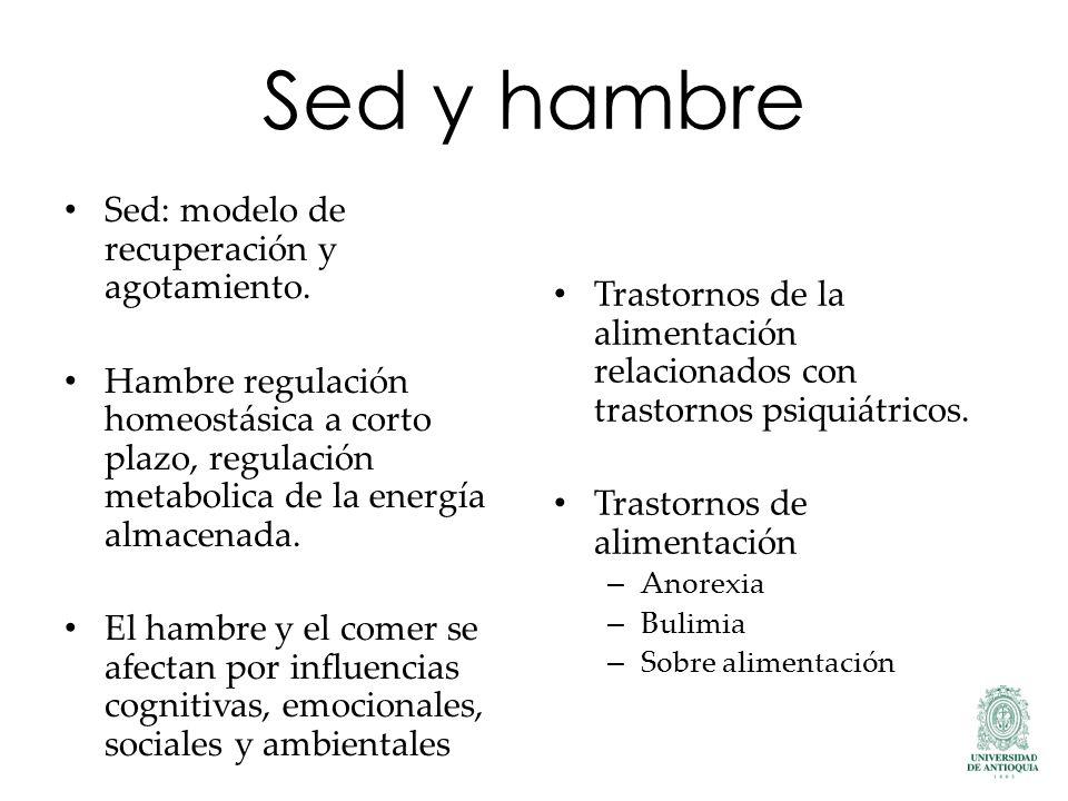 Sed y hambre Sed: modelo de recuperación y agotamiento.