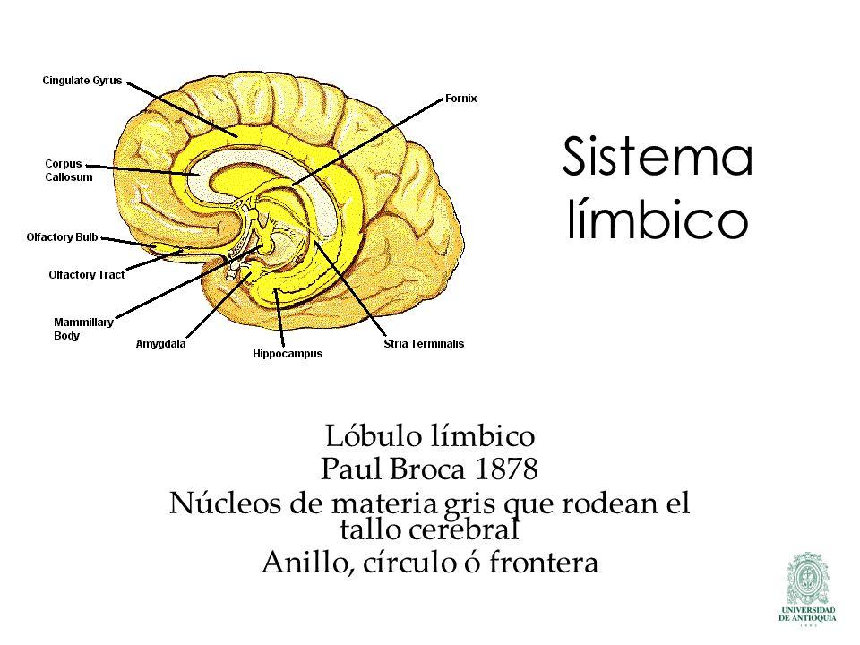Sistema límbico Lóbulo límbico Paul Broca 1878