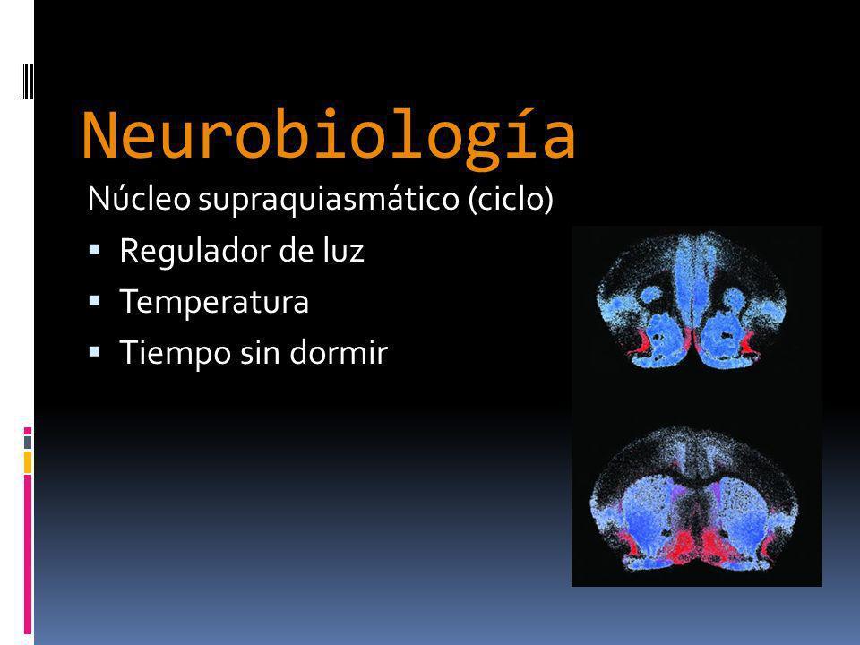 Neurobiología Núcleo supraquiasmático (ciclo) Regulador de luz