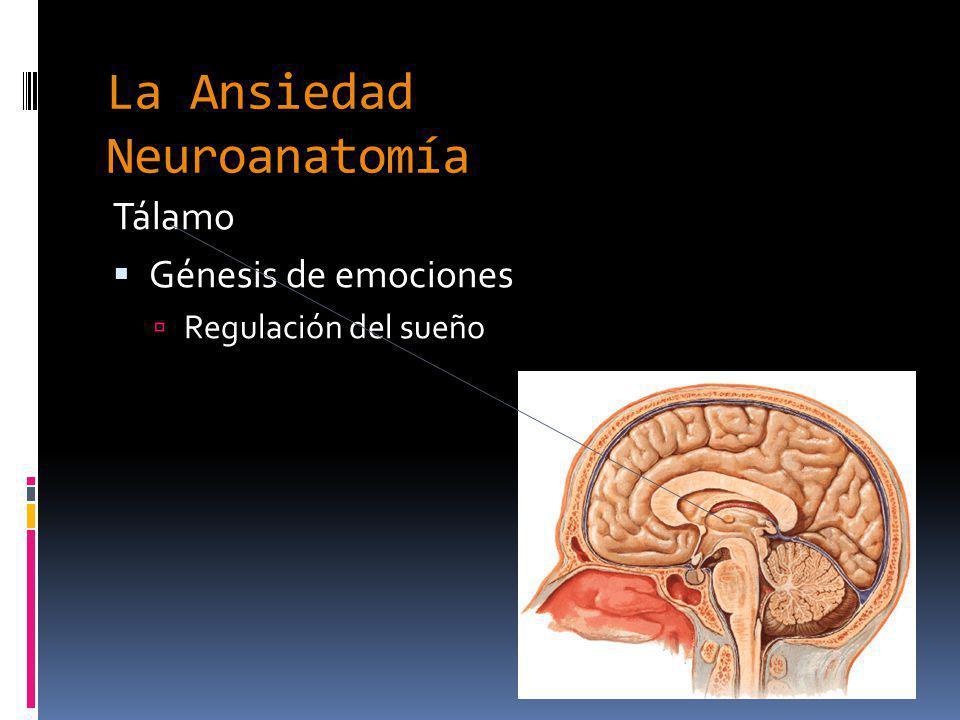 La Ansiedad Neuroanatomía