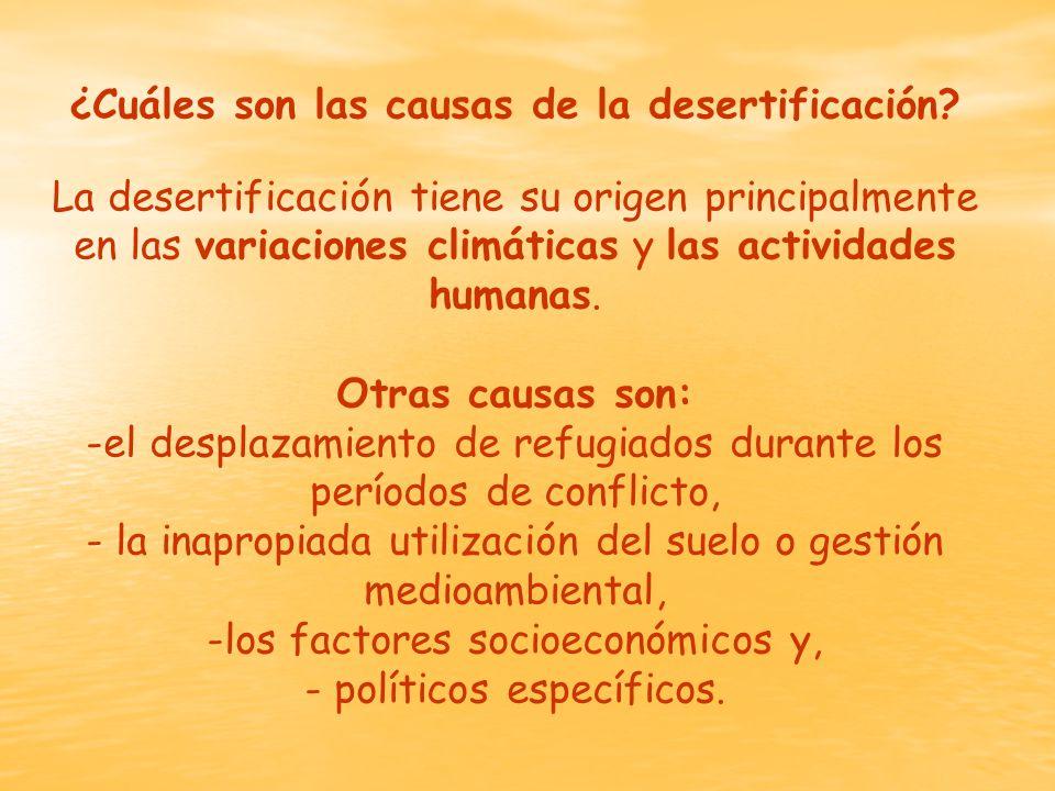 ¿Cuáles son las causas de la desertificación