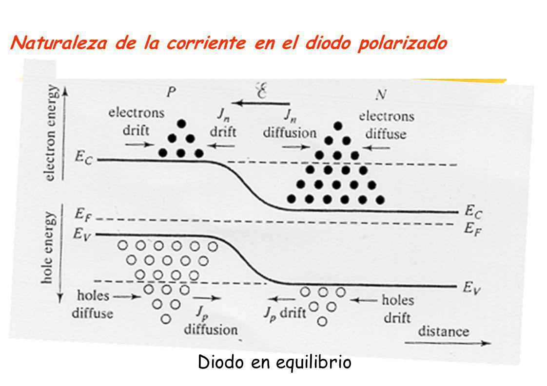 Naturaleza de la corriente en el diodo polarizado