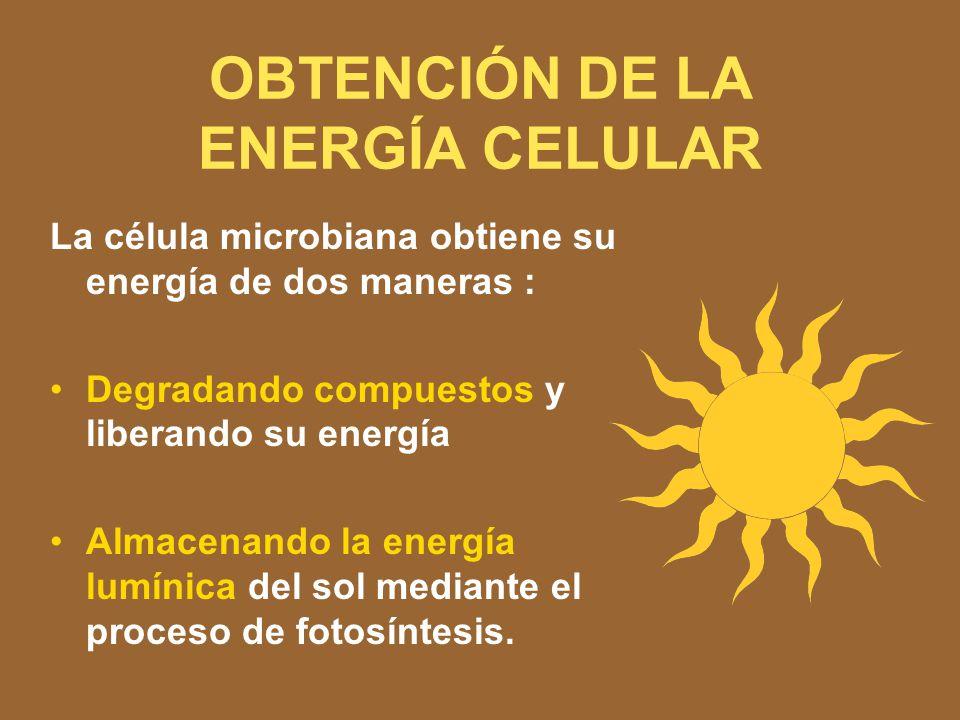 OBTENCIÓN DE LA ENERGÍA CELULAR