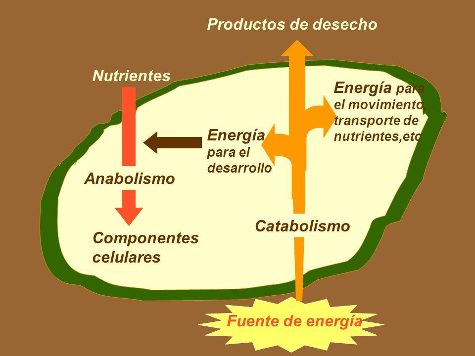 Energía para el movimiento, transporte de nutrientes,etc