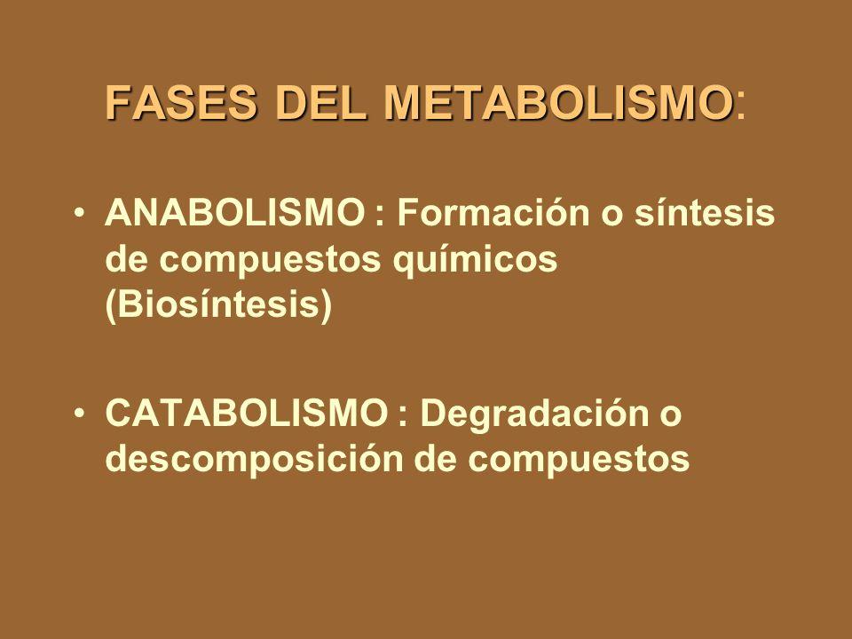 FASES DEL METABOLISMO: