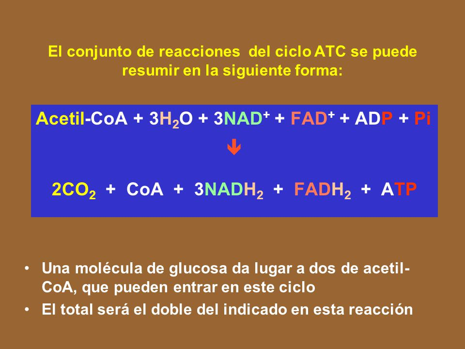 2CO2 + CoA + 3NADH2 + FADH2 + ATP