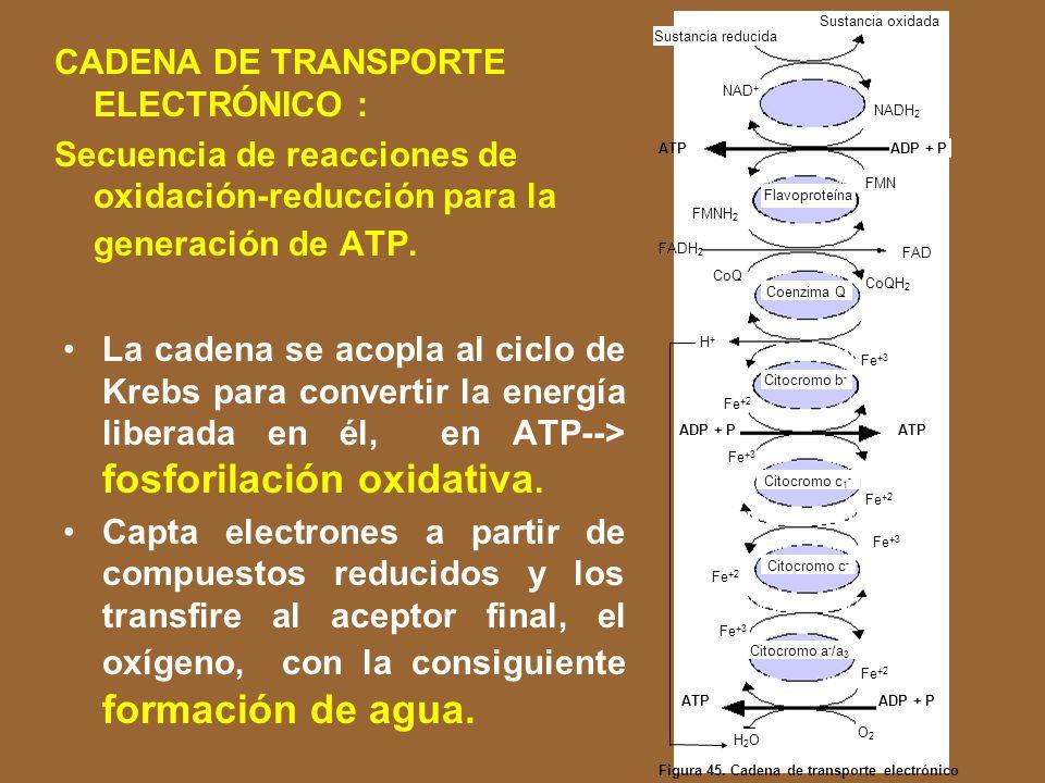 CADENA DE TRANSPORTE ELECTRÓNICO :