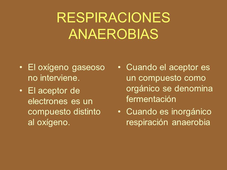 RESPIRACIONES ANAEROBIAS