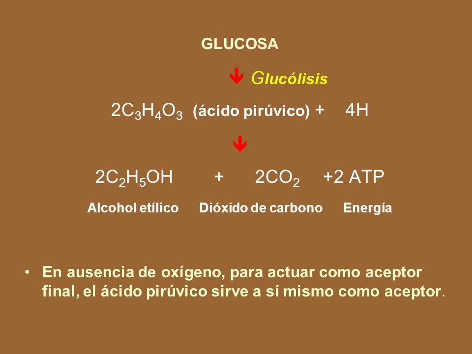 Alcohol etílico Dióxido de carbono Energía