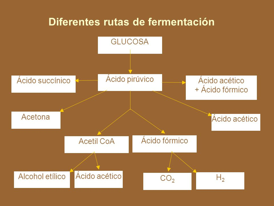 Diferentes rutas de fermentación
