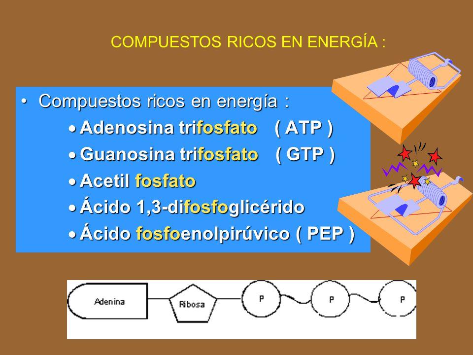 Compuestos ricos en energía : Adenosina trifosfato ( ATP )