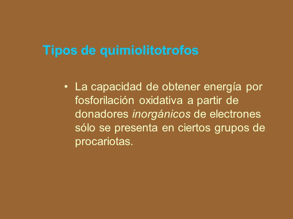 Tipos de quimiolitotrofos