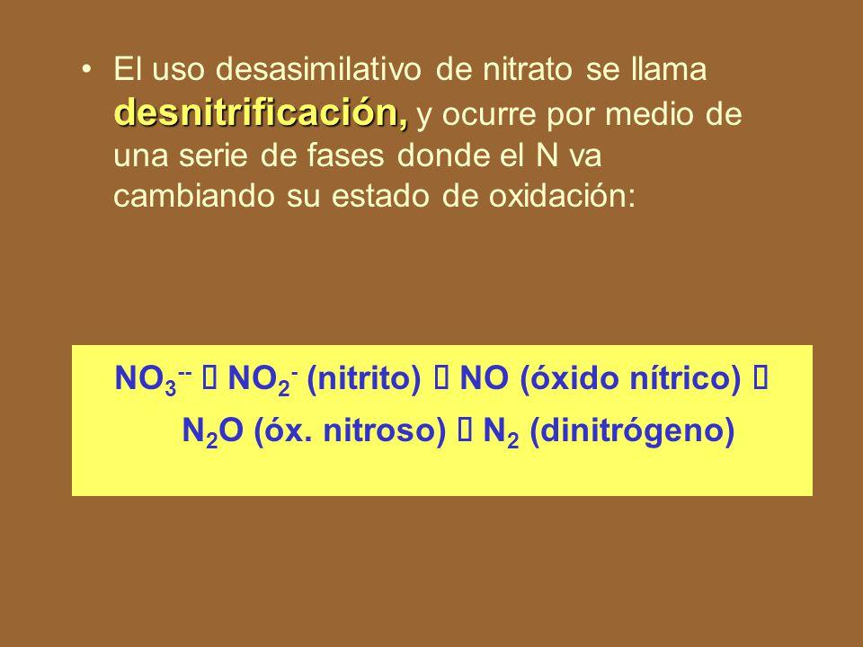El uso desasimilativo de nitrato se llama desnitrificación, y ocurre por medio de una serie de fases donde el N va cambiando su estado de oxidación: