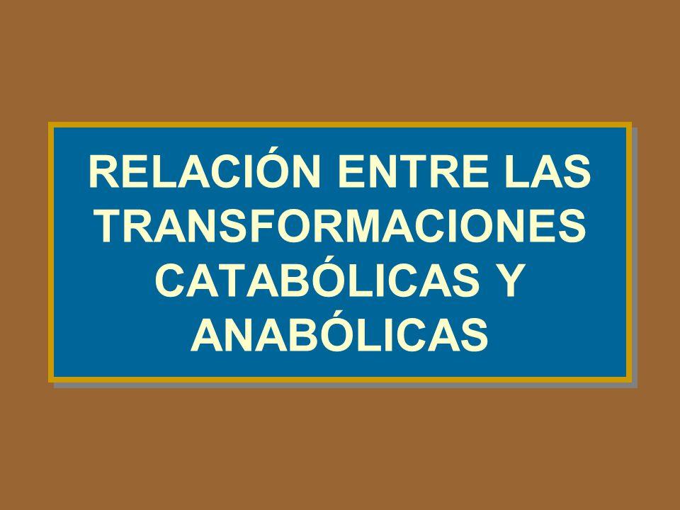 RELACIÓN ENTRE LAS TRANSFORMACIONES CATABÓLICAS Y ANABÓLICAS