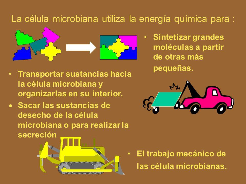 La célula microbiana utiliza la energía química para :