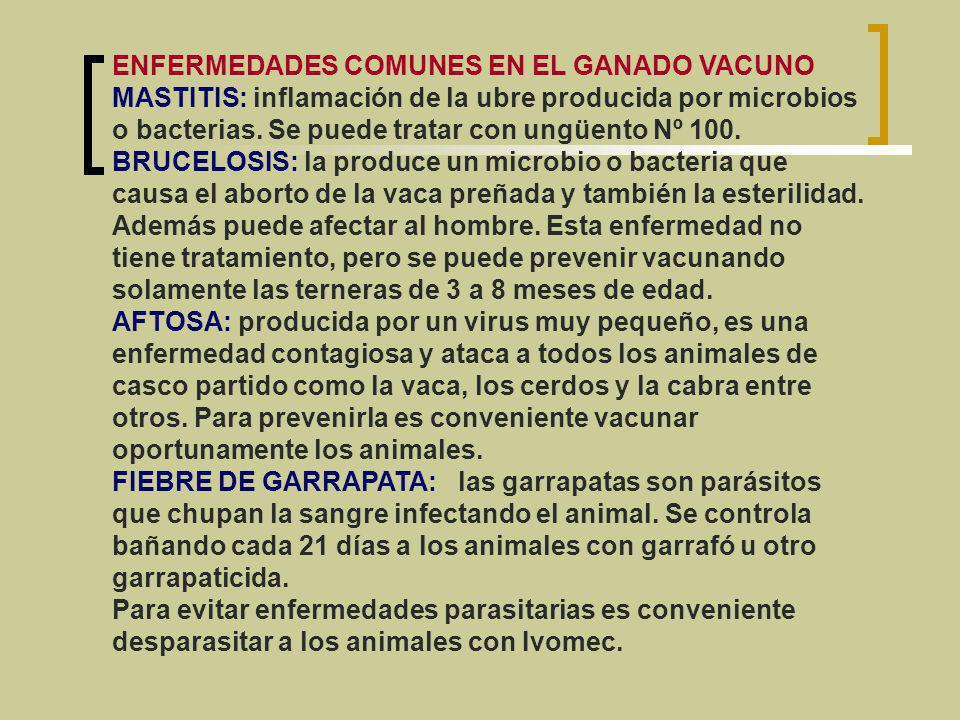 ENFERMEDADES COMUNES EN EL GANADO VACUNO