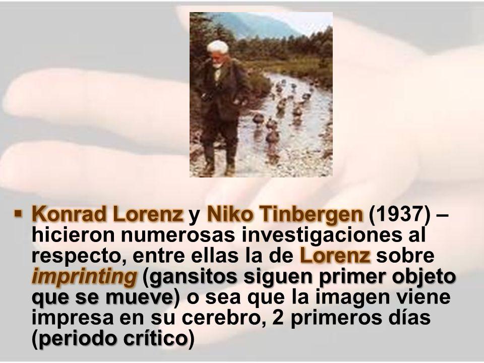 Konrad Lorenz y Niko Tinbergen (1937) – hicieron numerosas investigaciones al respecto, entre ellas la de Lorenz sobre imprinting (gansitos siguen primer objeto que se mueve) o sea que la imagen viene impresa en su cerebro, 2 primeros días (periodo crítico)