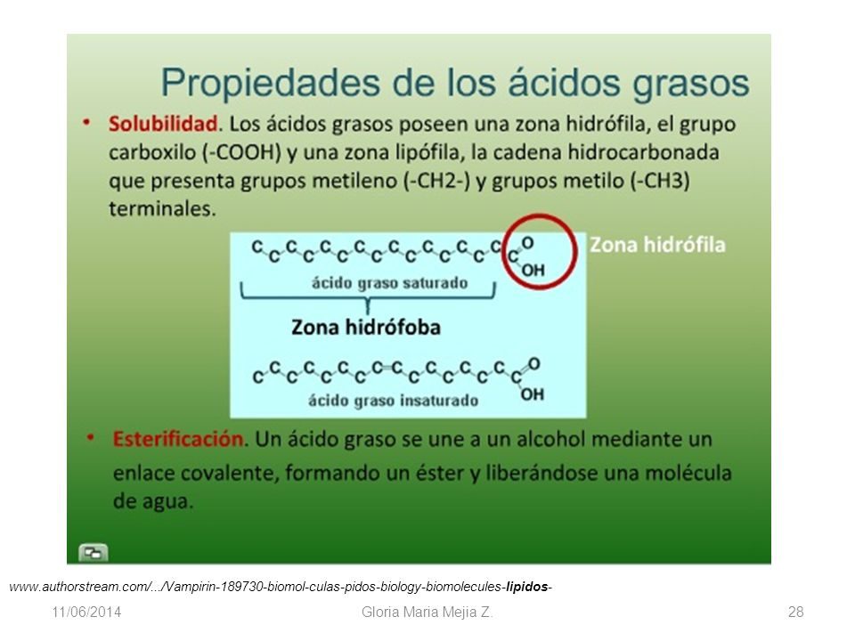 www.authorstream.com/.../Vampirin-189730-biomol-culas-pidos-biology-biomolecules-lipidos- 01/04/2017.
