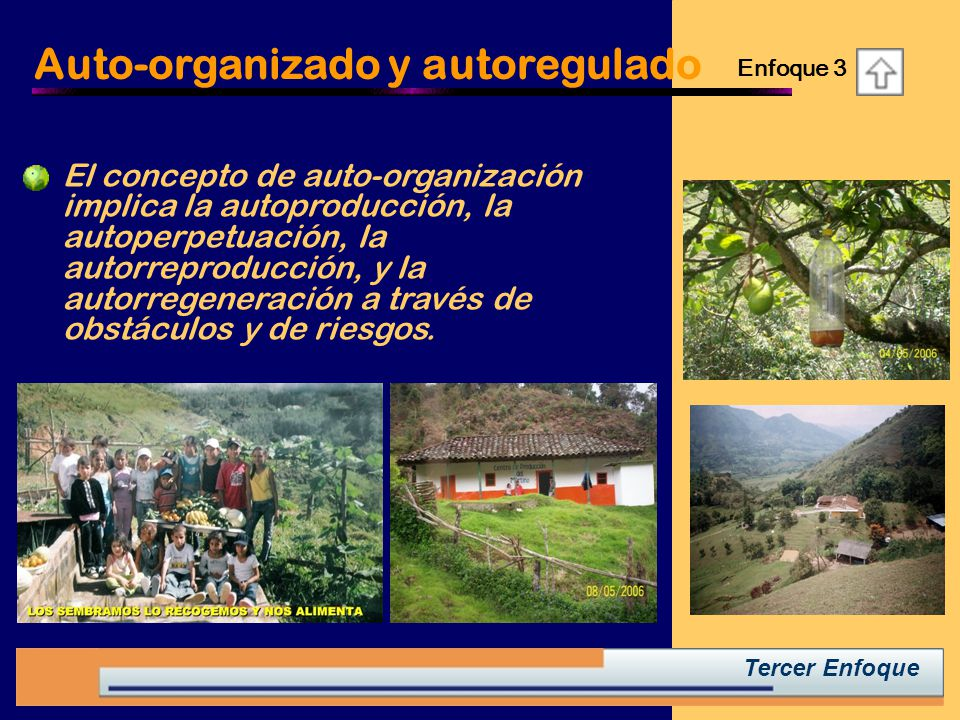 Auto-organizado y autoregulado