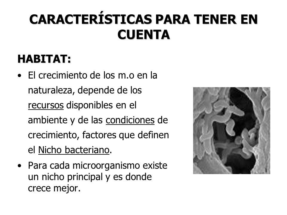 CARACTERÍSTICAS PARA TENER EN CUENTA