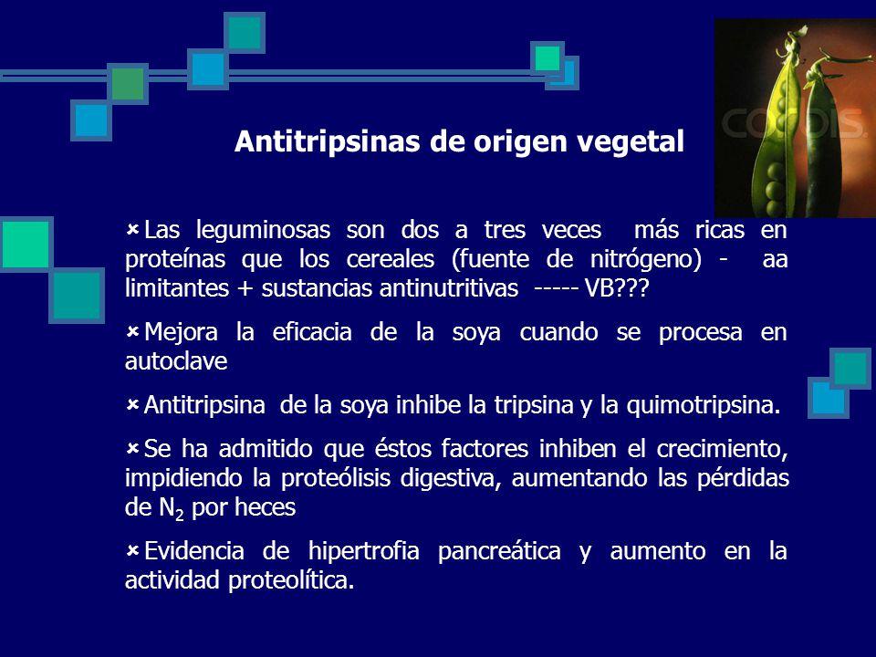 Antitripsinas de origen vegetal