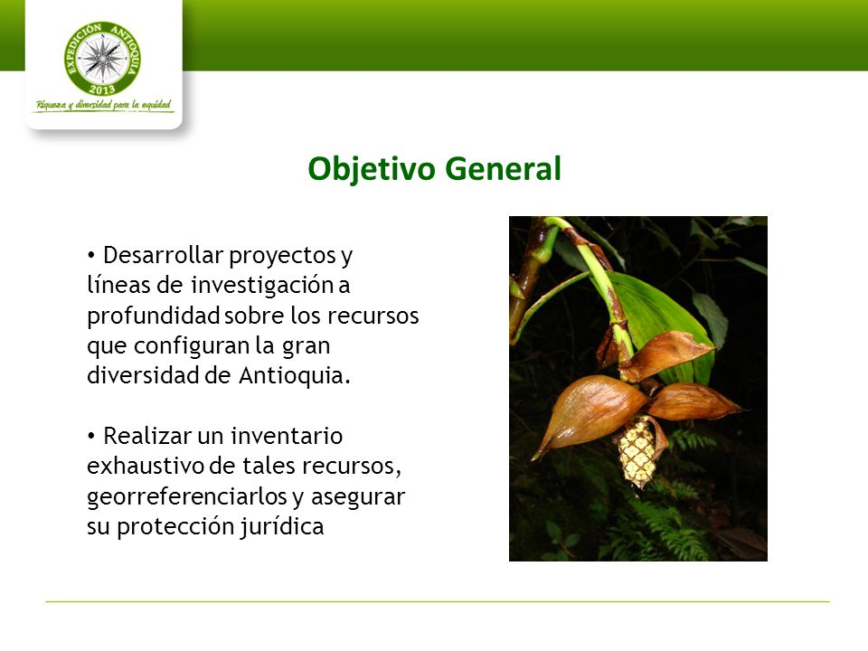 Objetivo General Desarrollar proyectos y líneas de investigación a profundidad sobre los recursos que configuran la gran diversidad de Antioquia.