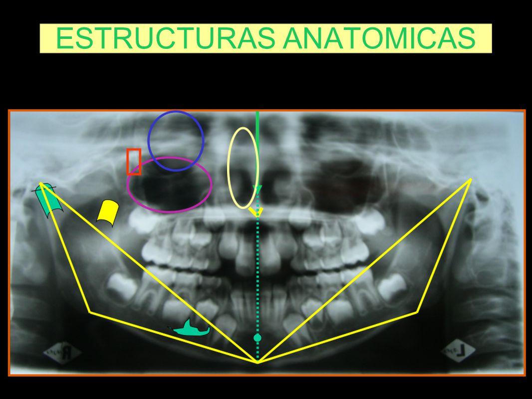 ESTRUCTURAS ANATOMICAS