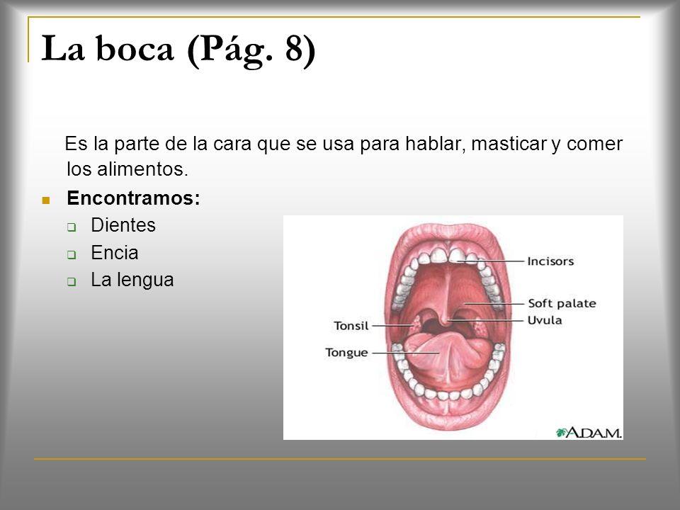 La boca (Pág. 8) Es la parte de la cara que se usa para hablar, masticar y comer los alimentos. Encontramos: