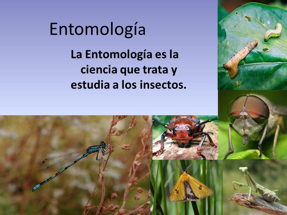 La Entomología es la ciencia que trata y estudia a los insectos.