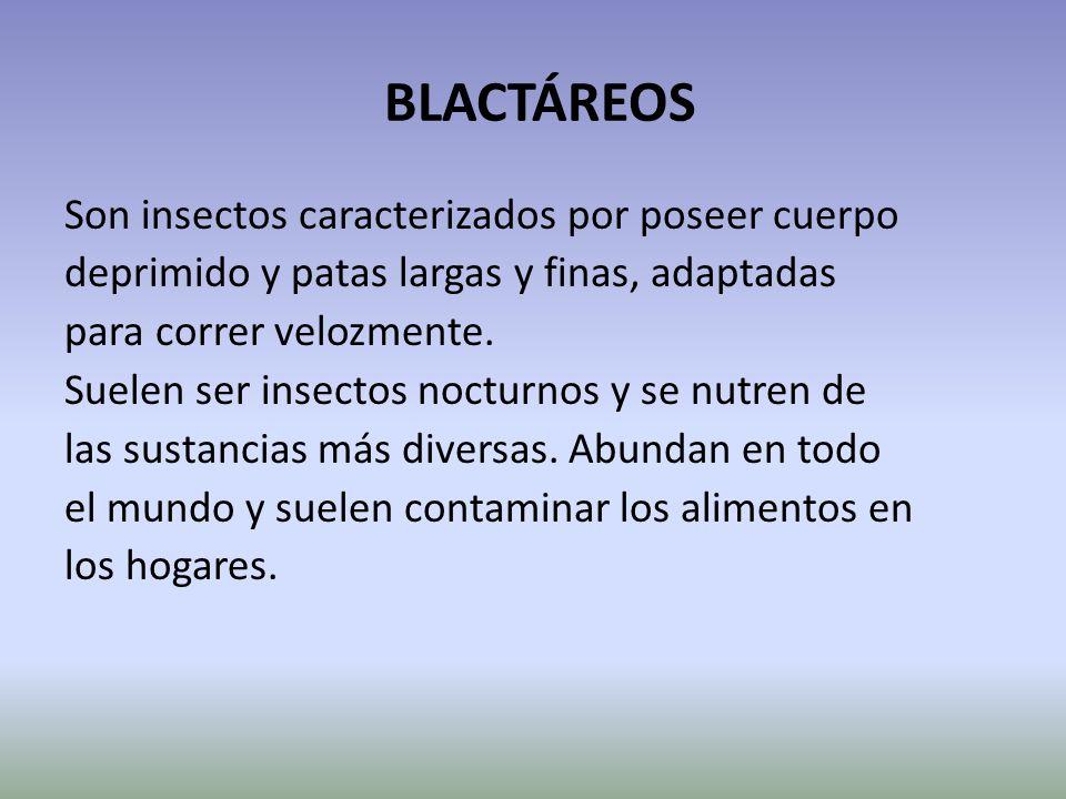 BLACTÁREOS