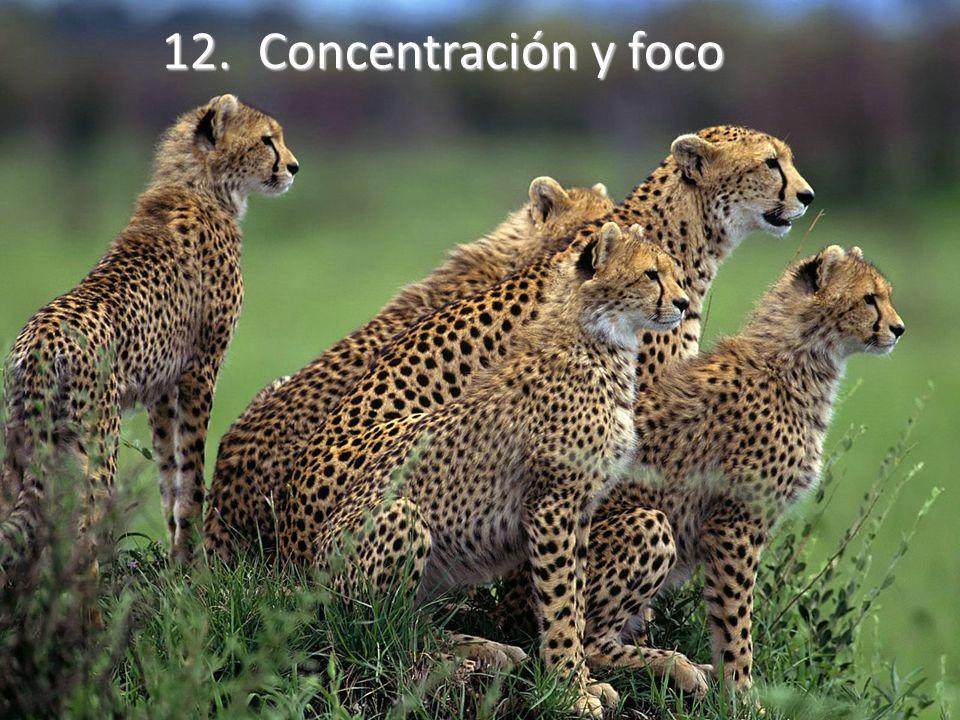 12. Concentración y foco