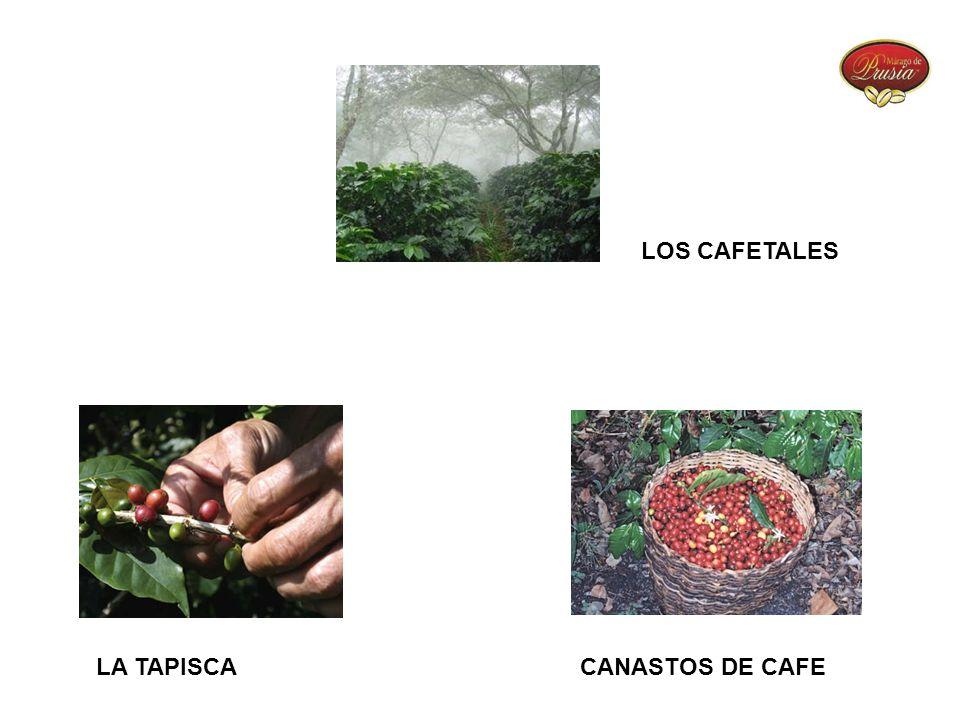 LOS CAFETALES LA TAPISCA CANASTOS DE CAFE