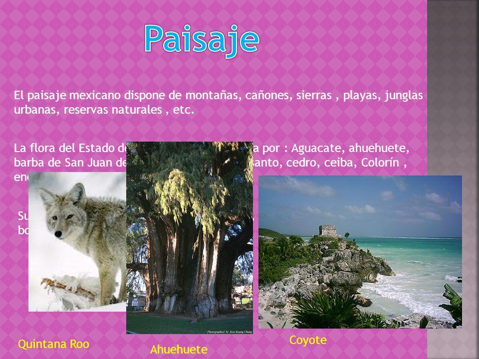 Paisaje El paisaje mexicano dispone de montañas, cañones, sierras , playas, junglas urbanas, reservas naturales , etc.