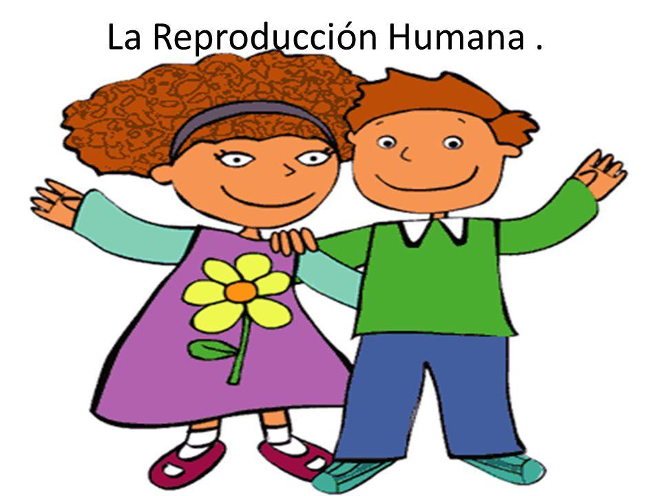 La Reproducción Humana .