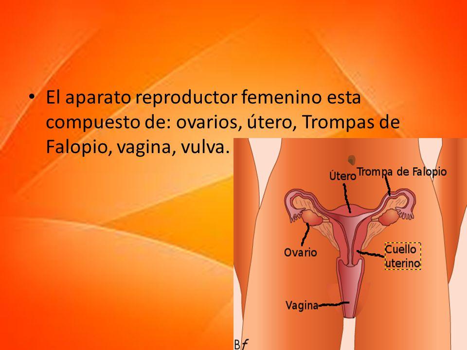 El aparato reproductor femenino esta compuesto de: ovarios, útero, Trompas de Falopio, vagina, vulva.