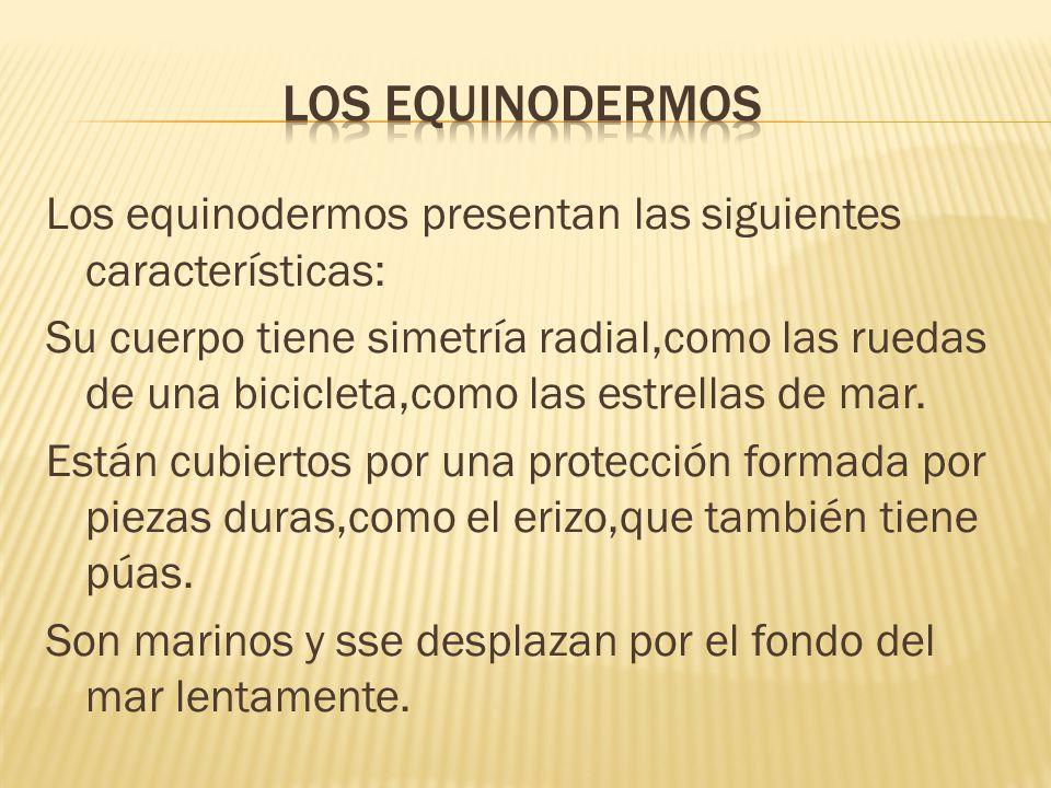 los equinodermos
