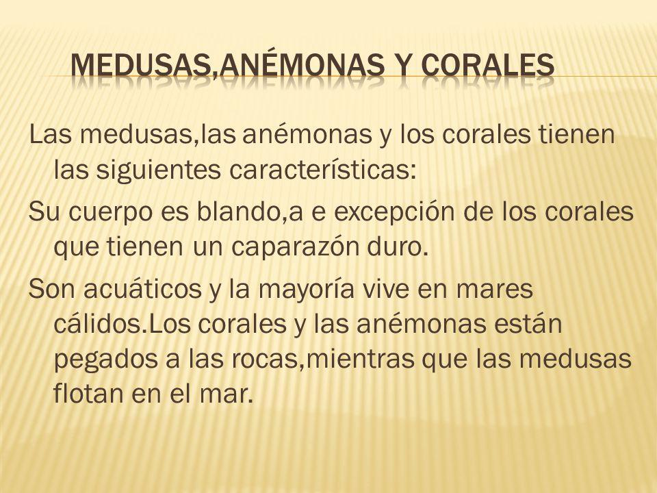 Medusas,anémonas y corales