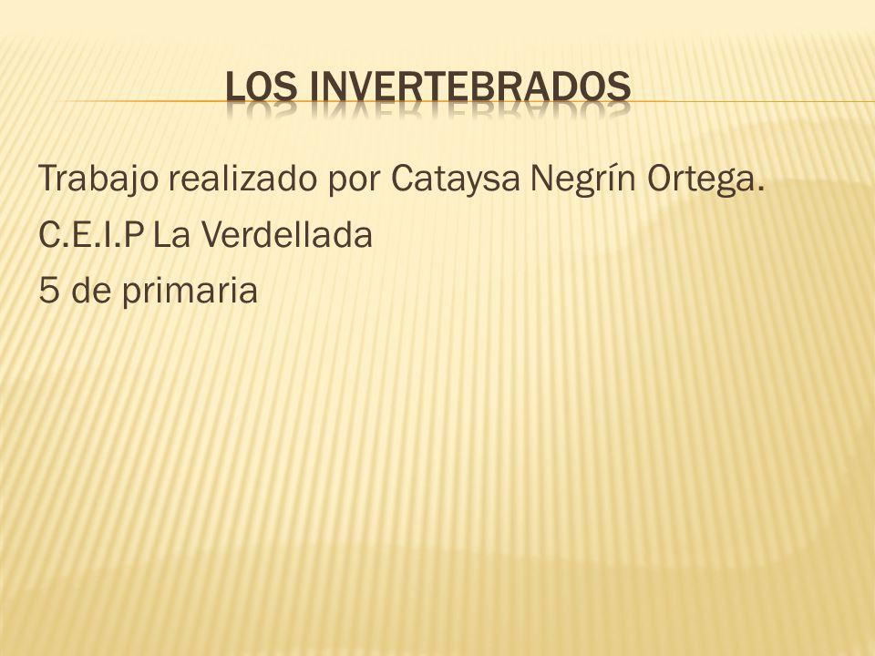 los invertebrados Trabajo realizado por Cataysa Negrín Ortega. C.E.I.P La Verdellada 5 de primaria