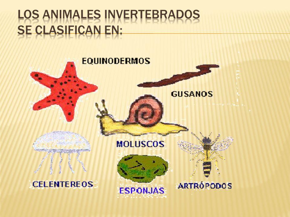 Los animales invertebrados se clasifican en: