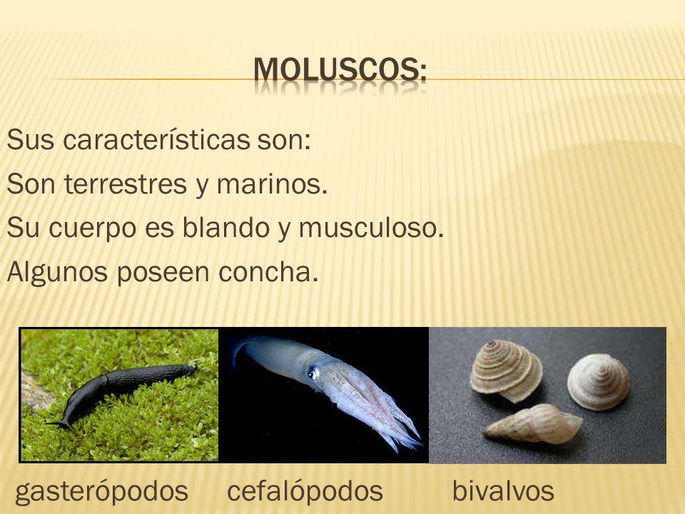 moluscos:
