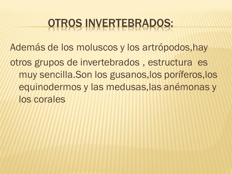 OTROS INVERTEBRADOS:
