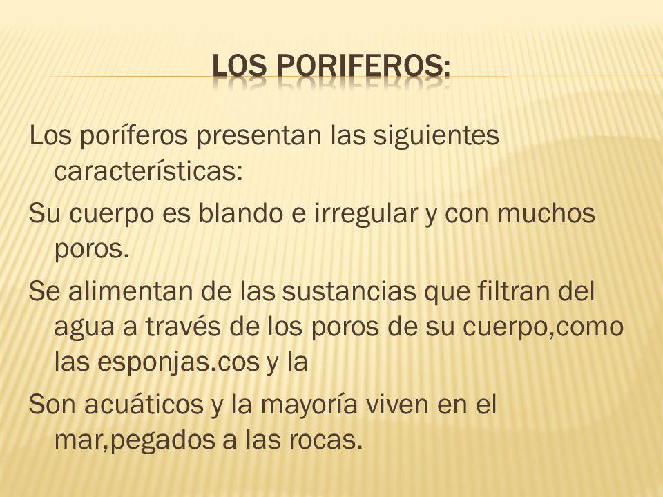 los poriferos: