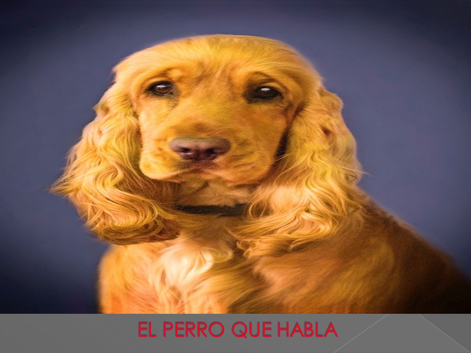 el perro que habla