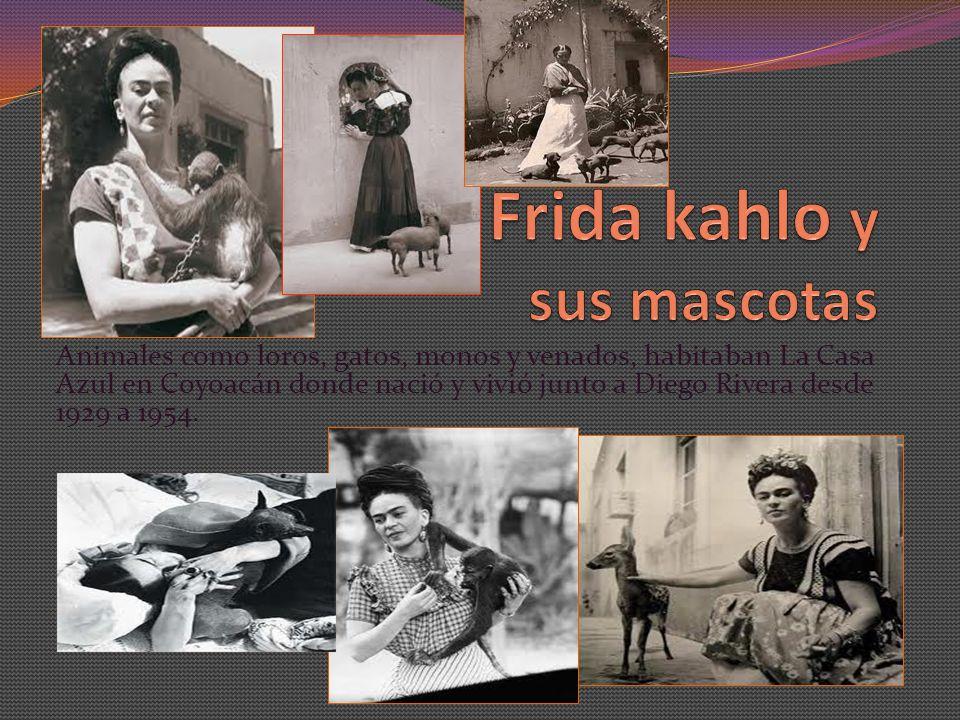 Frida kahlo y sus mascotas