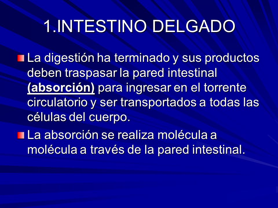 1.INTESTINO DELGADO