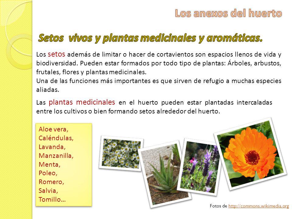 Setos vivos y plantas medicinales y aromáticas.