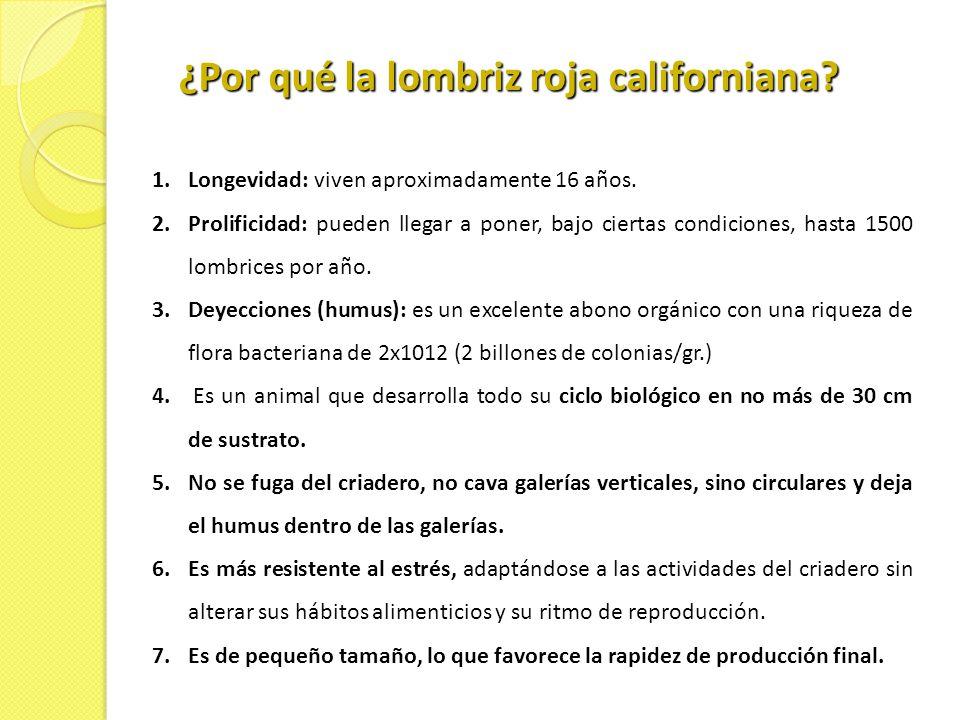 ¿Por qué la lombriz roja californiana
