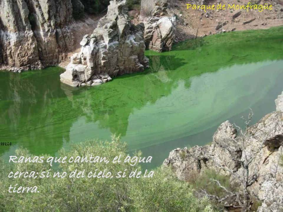 Ranas que cantan, el agua cerca; si no del cielo, si de la tierra.